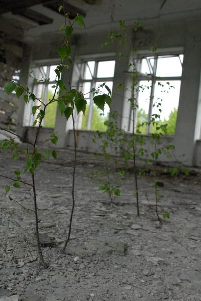 plante_poussant_maison